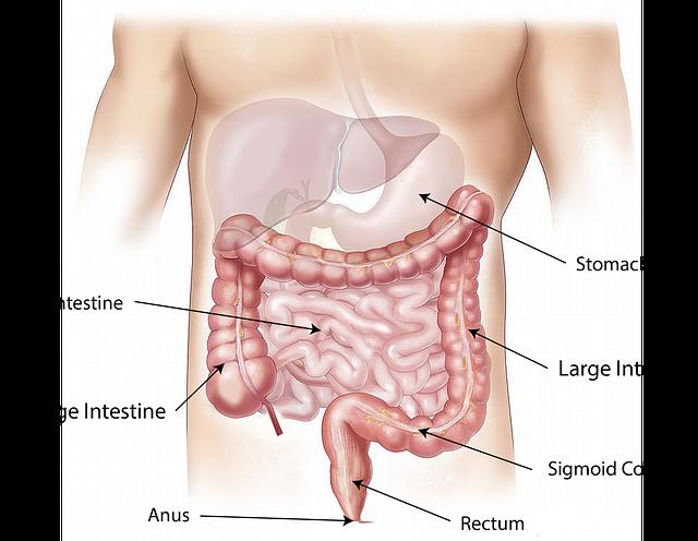 gros intestin ou côlon