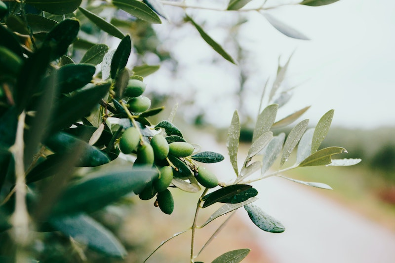 les solutions naturelles pour se débarasser du candida albicans cure anti-candida antifongique naturel