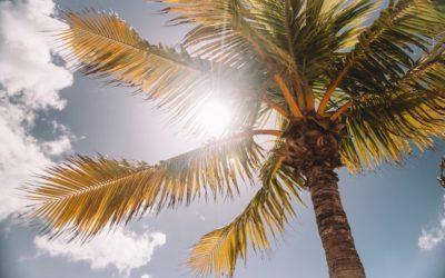 Pourquoi sommes-nous moins malades en été ?